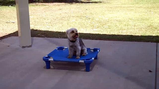 www.tlck9academy.com – Small Dog Obedience Training – Phoenix Dog Training