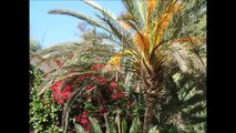 #331 ● Visiting Marrakesh, Essaouira and Agadir ● Morocco | HD