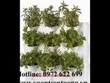 0972622699/thi công vườn rau sạch cho sân thượng và ban công,vườn thẳng đứng/ thi công vườn rau sạch