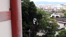 Ancient Shinto Shrine With an Amazing Ocean View, Wakayama, Japan