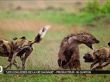 Dans les coulisses de La vie sauvage - vidéo Dailymotion