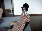 【 Chihuahua 】チワワ MAX
