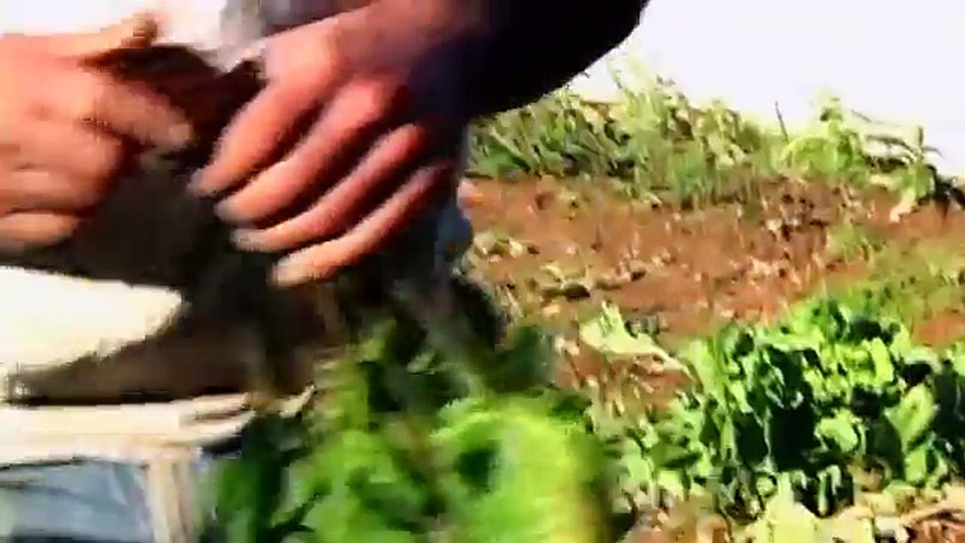 #2 PSG_Cherry Grove Organic Farm;  Beets and Chef Alex