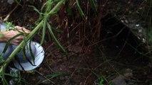 Διασωση κουταβιων απο αρδευτικο καναλι-rescuing puppies