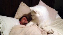 Personne ne le croit que son chien fait ça à tous les matins, alors il installe une caméra pour le prouver!