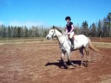 cantering, counter canter, changes. :)