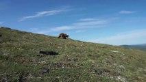 Surpris par un ours, un randonneur tente le tout pour le tout pour sauver sa vie