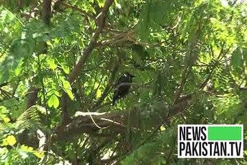 کراچی میں محولیات کے لیے نقصان دے درختوں کی شجرکاری