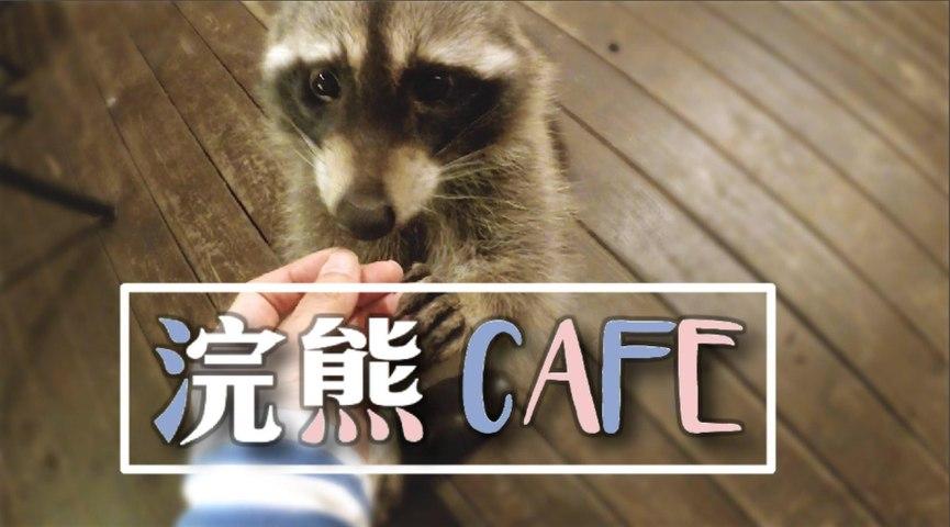 與最跩的毛孩喝咖啡-首爾的「浣熊CAFE」
