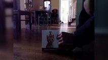 Chat VS carte de voeux de chats qui miaulent. Réaction hilarante