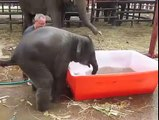 This is what happens when you give a baby elephant a pool