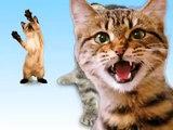 cat joy joy