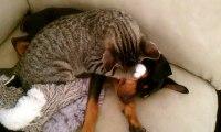 Un chat cajole un chien affaibli à son retour de chez le vétérinaire
