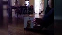 Chat VS carte de voeux de chats qui miaulent. R hilarante