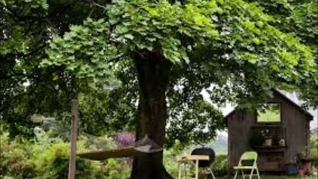 Amazing Facts about Trees
