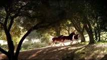 Budweiser Commercial 60 Sec | Advertisement Discover Budweiser The Great American Lager Beer