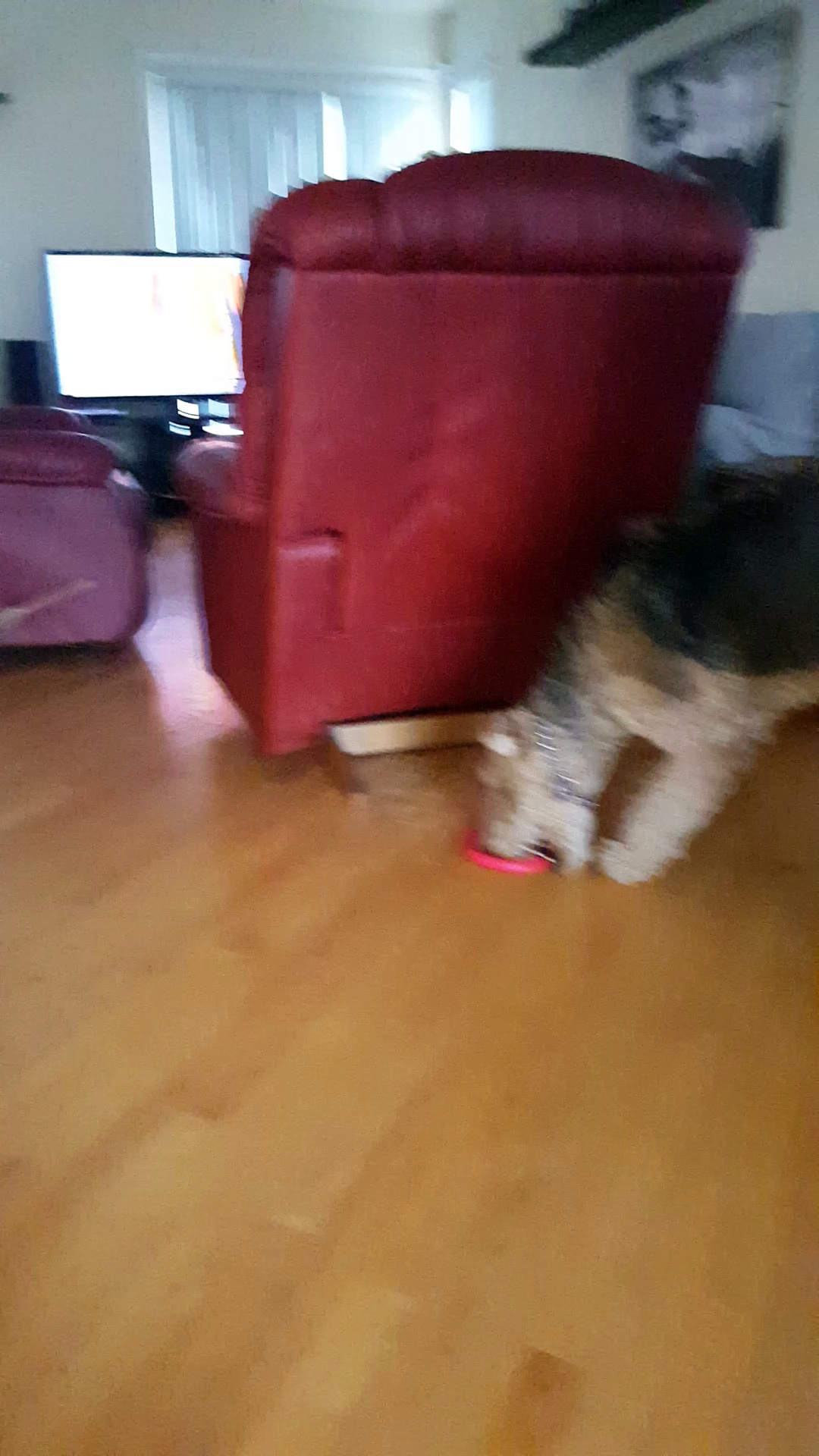 Dog enjoying broken toy