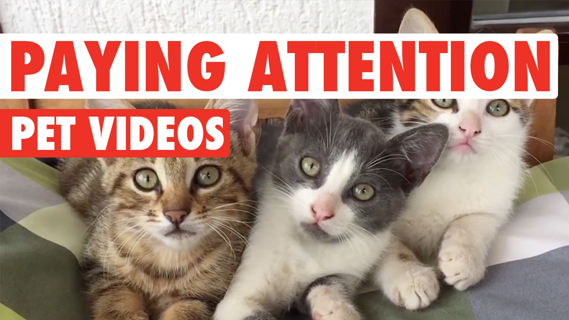 Pets Paying Attention || Funny Pet Compilation