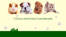 Ciudad de Los Ángeles - Clínica veterinaria Fuenlabrada - Centro veterinario Madrid