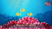 Les petits poissons dans leau / The small fish in the water - chanson en français