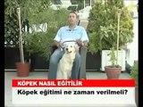Pitbullife Köpek Eğitimi Bilgilendirmesi