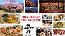 Amazing Japan #005 Ichigo gari - Strawberry picking - イチゴ狩り