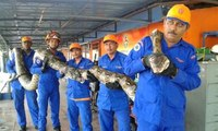 Dünyanın En Uzun Yılanı Yakalandı