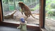 Ne tentez jamais de réveiller un tigre pendant sa sieste !