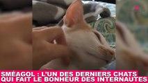 Sméagol : l'un des derniers chats qui fait le bonheur des internautes ! Tout de suite dans la minute chat #186