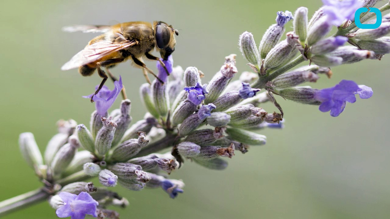 Ortho Delivers Good News to Bees