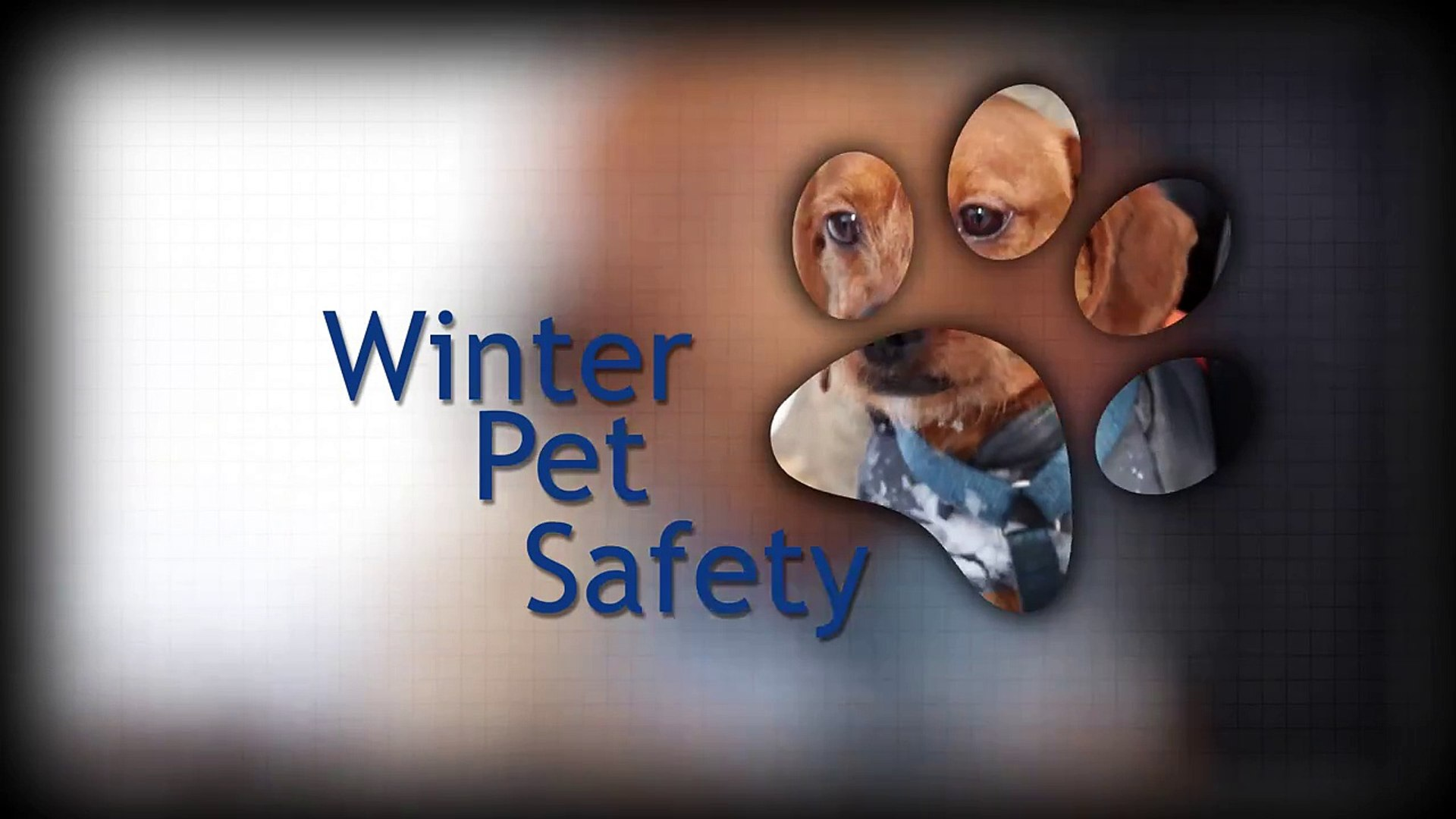 Pets and Cold Weather