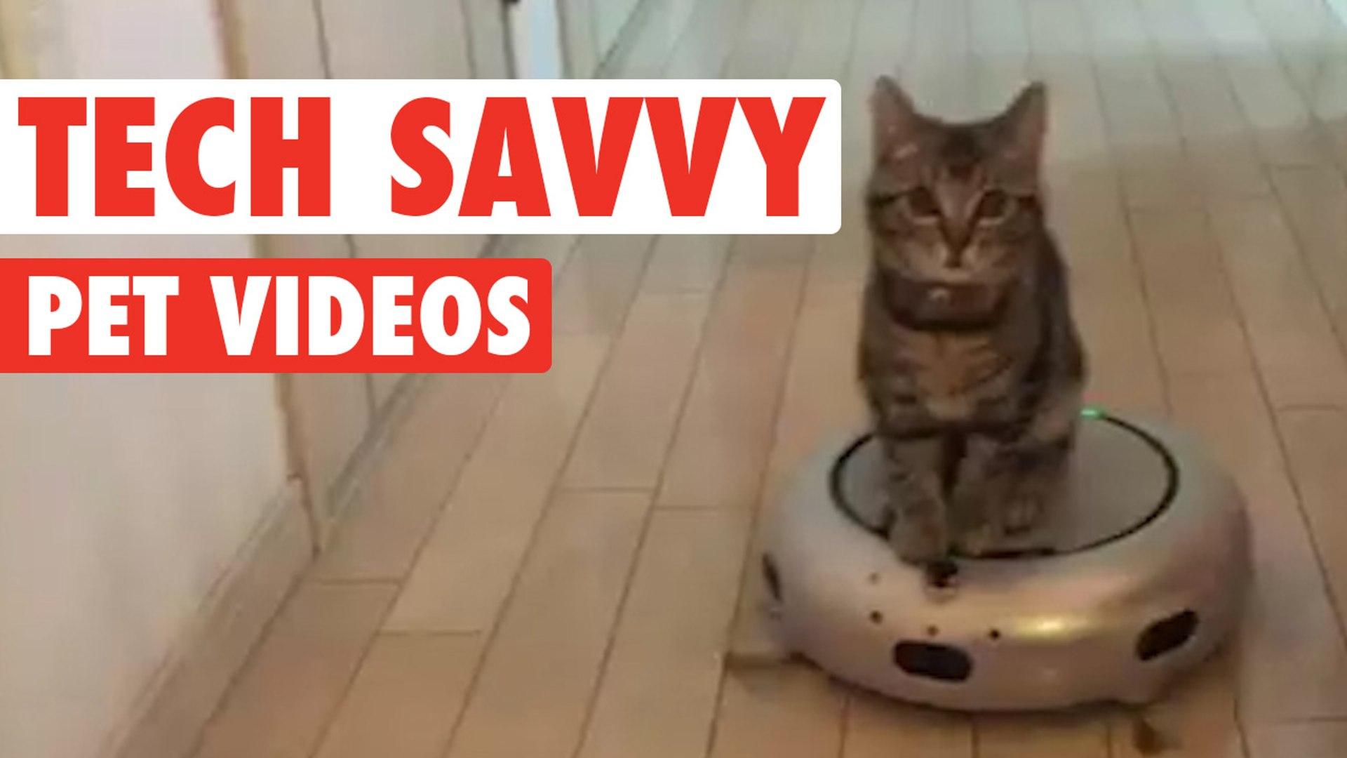 Tech-savvy Pets || Funny Pet Compilation