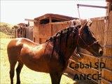 Cabal SD y Su HIjo Cabal II PRE