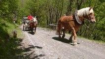 Debardage au cheval, Montdenis, mai 2015, Hippotese.