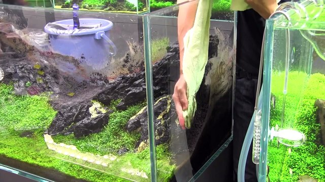 [ADA view 255] Follow-up video of NA Gallery aquariums. 43weeks(1)