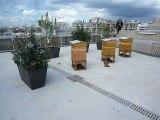 Des ruches sur le toit du siège du Parti Communiste à Paris