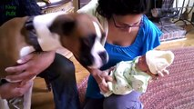 Cute Cats and Dogs Meeting Babies Compilation 2016