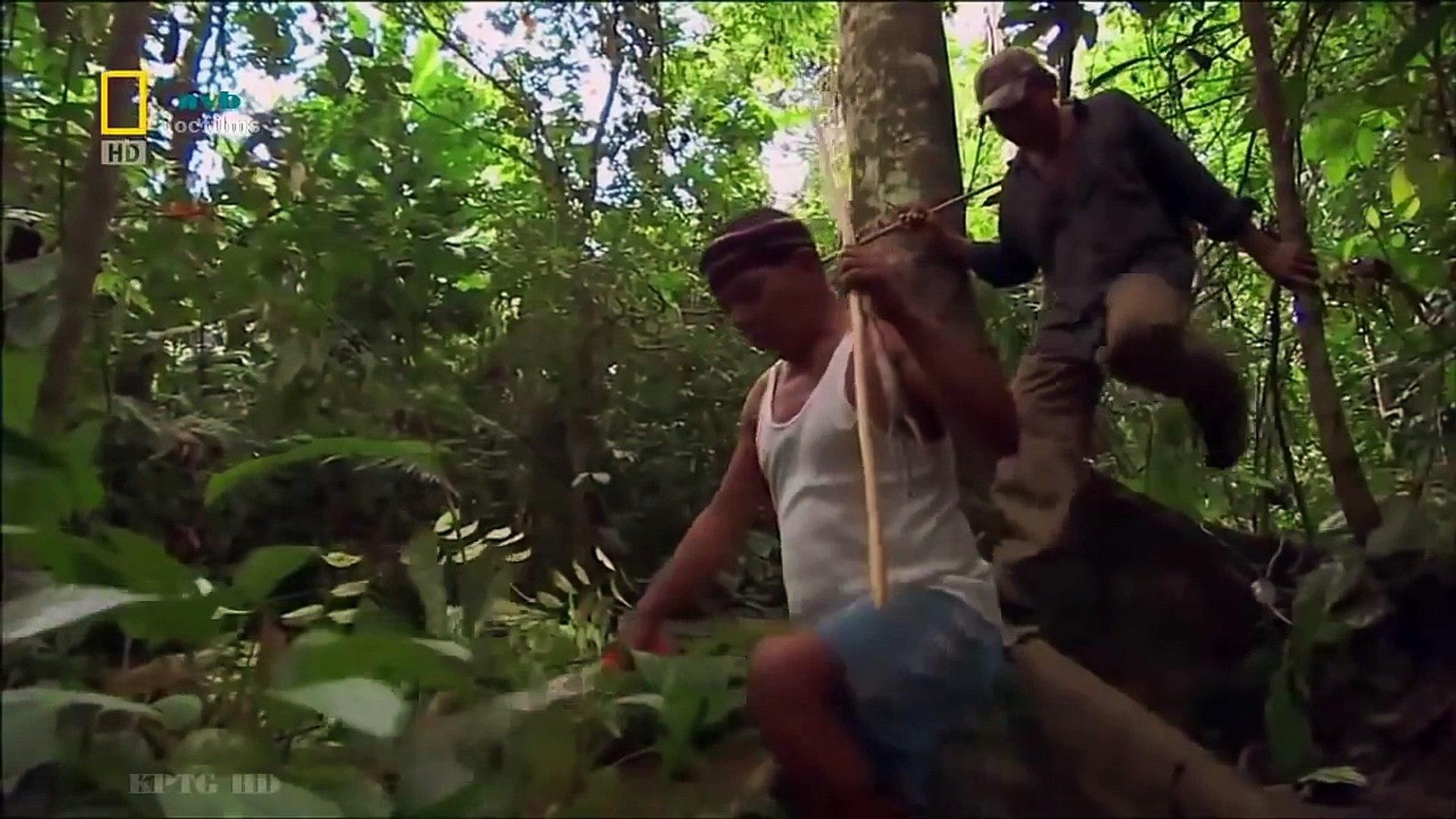 Thế giới động vật | Động vật hoang dã Amazon - thuyết minh