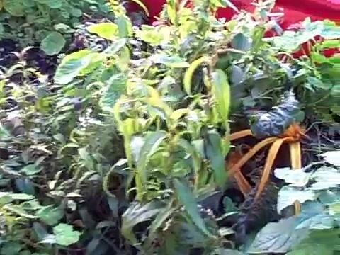 Popular Videos – Urban agriculture & Aquaponics