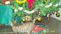 Navidades blancas   Nins