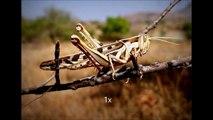 Crickets Chirping Slowed Down 800% (creepy)