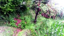 A view of Nature During Rain In Charapani Murree Pakistan