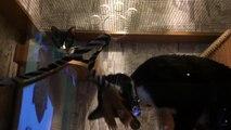 Twin cats in beer garden