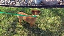 Saving Death Row Dogs - Amarillo to Wichita