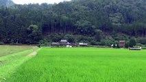 「かやぶきの里」にはかやぶき屋根の家がいっぱい!京都(3-1) Kayabukinosato, Thatched roof house, Miyama, Kyoto, Japan