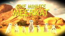 Meerkat argues with Avatar director James Cameron