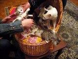 Cute Mixed Persian Kittens !