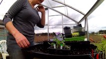 Ep25: Transplanting tomatoes & cucumbers * ALLOTMENT GARDEN HAPPINESS