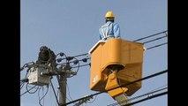 Chimpanzé échappé du zoo grimpe sur des lignes électrique et s'électrocute