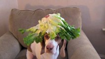 100 Fruits Vegetables on Dogs Head in 100 Seconds Cute Dog Maymo - This Dog Balances Every